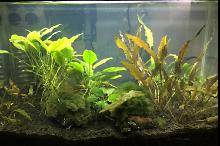 10 Gallon L on Feb 21, 2018