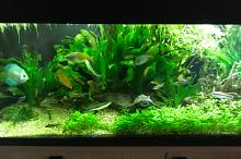 My Aquarium on Feb 25, 2018