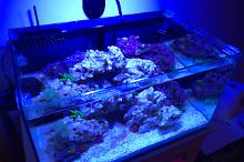 The reef under the stairs Thumbnail