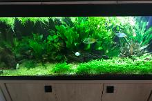 My Aquarium on Mar 3, 2018