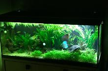My Aquarium on Mar 4, 2018