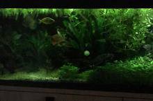 My Aquarium on Mar 9, 2018