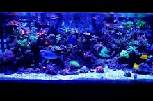 Rickerman1 270 Gallon Reef Thumbnail