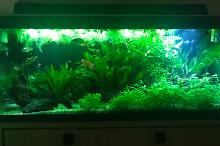 My Aquarium on Mar 13, 2018