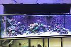 My Aquarium 2 on Mar 17, 2018