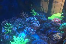 Our mixed Reef on Mar 21, 2018