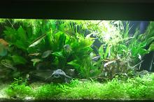 My Aquarium on Mar 23, 2018