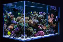 My 250l home reef on March 26, 2018