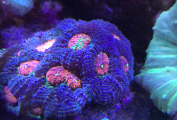 Saltwater Aquarium - Mixed Reef Tank on Apr 18, 2018