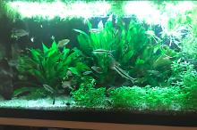 My Aquarium on May 2, 2018