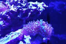 Red Sea Reefer 350 Thumbnail