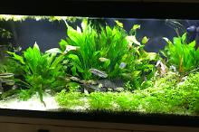 My Aquarium on May 19, 2018