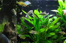 My Aquarium on May 20, 2018