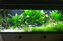 My Aquarium on May 22, 2018