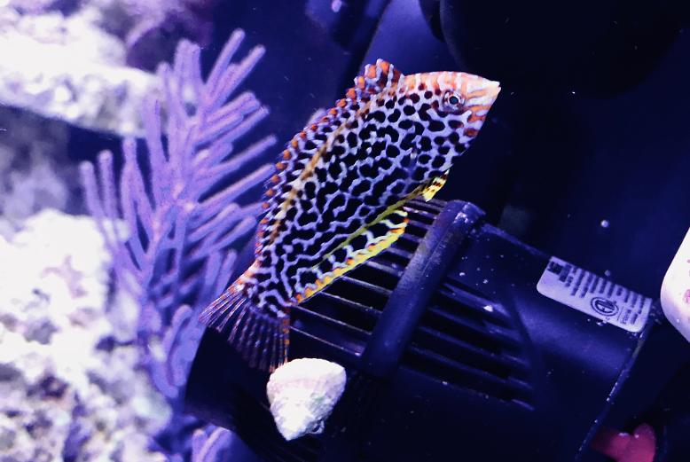 75G Mixed Reef on May 22, 2018