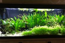 My Aquarium on Jul 2, 2018