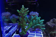 40G Reef on Jul 21, 2018