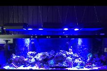 125g Mixed Reef Thumbnail