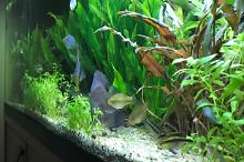 My Aquarium on Aug 6, 2018