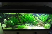 My Aquarium on Aug 8, 2018