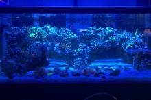 180 Gallon Display Thumbnail