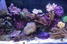 soft coral reef Thumbnail
