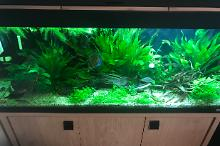 My Aquarium on Sep 1, 2018