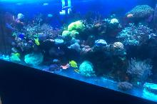 Our mixed Reef on Sep 3, 2018