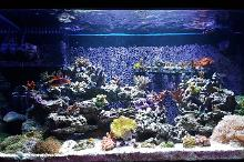 My Aquarium on September 23, 2018