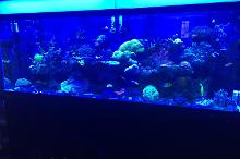 Our mixed Reef on Sep 30, 2018
