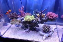 New layout of corals,May 12, 2013