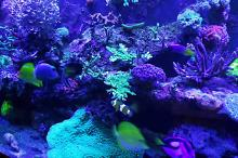 Our mixed Reef on Dec 31, 2018