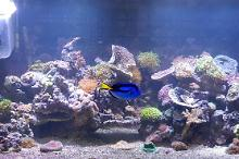 Display Aquarium Thumbnail