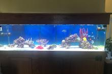 The Reef Tank  Thumbnail