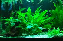 My Aquarium on Jan 5, 2019