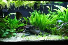 My Aquarium on Feb 10, 2019