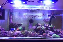 75 Gallon Reef  Thumbnail