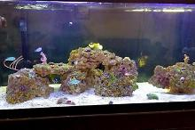 80 gallon reef Thumbnail