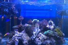Mixed nano Reef Thumbnail