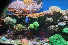 My Aquarium no 1 Thumbnail