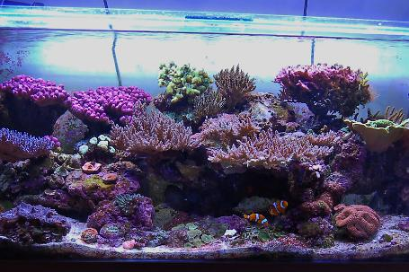 Uglyman's 4ft mixed reef Thumbnail