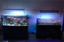 Home Aquariums Thumbnail