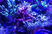 Our mixed Reef on Dec 17, 2019