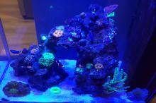 125ltr self build reef tank Thumbnail