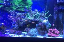 Our mixed Reef on Jan 13, 2020