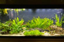My Aquarium on Jan 13, 2020