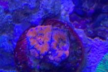 Ultra Red Acan