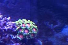 Ross 95 Wave Reef Thumbnail