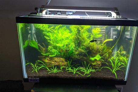 The Planted 10 Gallon Thumbnail