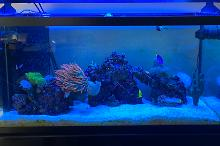 100 Gallon Reef Thumbnail